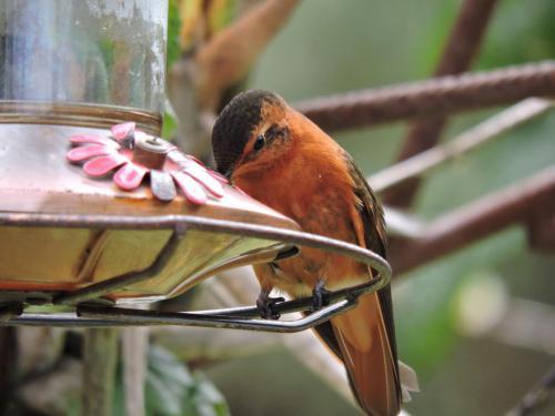 hummingbird-4045384 1920