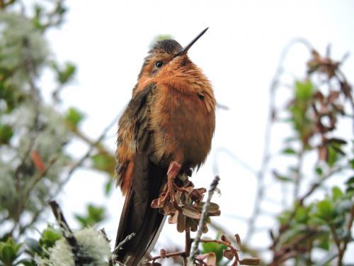 hummingbird-4045392 960 720